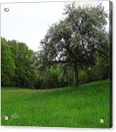 Rhineland-palatinate Summer Meadow Acrylic Print