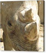 Rhino Closeup Acrylic Print