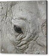 Rhino Eye Acrylic Print