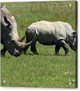Rhino Mother And Calf - Kenya Acrylic Print