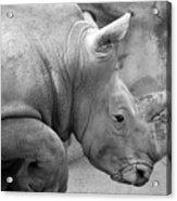 Rhino Profile Acrylic Print