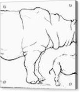 Rhinoceros Comparison Acrylic Print