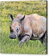 Rhinosceros Acrylic Print