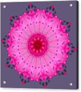 Rhoda Mandala Acrylic Print