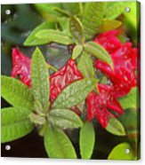 Rhodendron In 3d Acrylic Print