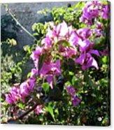 Rhodes Greece Flowers Acrylic Print
