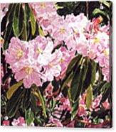 Rhodo Grove Acrylic Print