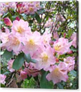 Rhododendron Flowers Garden Art Prints Floral Baslee Troutman Acrylic Print