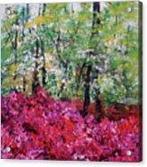 Rhododendron Glade Norfolk Botanical Garden 201821 Acrylic Print