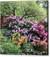 Rhododendron Hill Acrylic Print