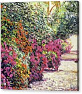 Rhododendron Pathway Exeter Gardnes Acrylic Print by David Lloyd Glover