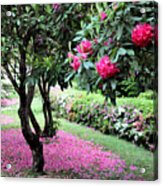 Rhododendrons Blooming Villa Carlotta Italy Acrylic Print
