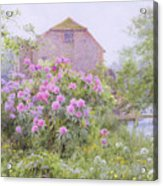 Rhododendrons By A Watermill Acrylic Print by George Marks