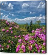 Rhododendrons Acrylic Print