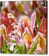 Rhododendrons Floral Art Prints Canvas Pink Orange Rhodies Baslee Troutman Acrylic Print