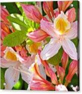 Rhododendrons Garden Floral Art Print Pink Rhodies Acrylic Print