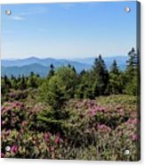 Rhododendron On Roan Mountain Acrylic Print