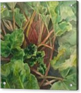 Rhubarb Spy Acrylic Print