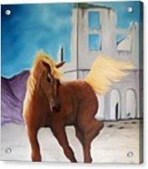 Rhyolite Pony Acrylic Print