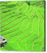 Rice Field Terraces Acrylic Print