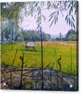 Rice Fields At Bumi Agung Lampung Sumatra Indonesia 2008  Acrylic Print