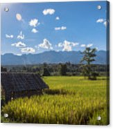 Rice Fields Of Thailand Acrylic Print