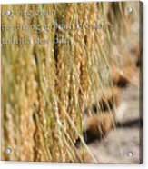 Rice Harvest - Haiku Acrylic Print