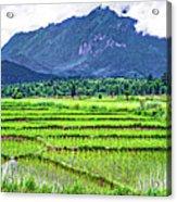 Rice Paddies And Mountains Acrylic Print