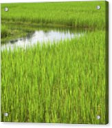 Rice Paddy Field In Siem Reap Cambodia Acrylic Print by Julia Hiebaum