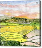 Ricefield Terrace Acrylic Print