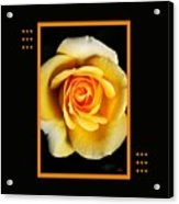 Rich And Dreamy Yellow Rose  With Design Acrylic Print
