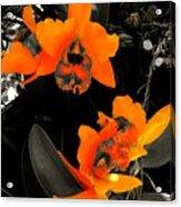 Richness In Sunshine Acrylic Print