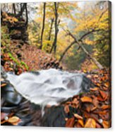 Ricketts Glen State Park Ganoga Falls Allegheny Mountains Pennsylvania Acrylic Print