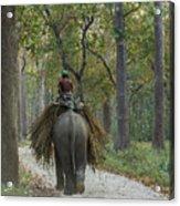 Riding An Elephant Acrylic Print