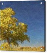 Rio Grande Bosque Blue and Gold, New Mexico Acrylic Print