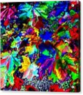 Riot Of Color Acrylic Print