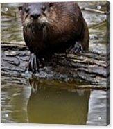 Rive Otter Acrylic Print