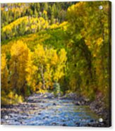 River And Aspens Acrylic Print