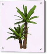 River Cycad Plants Acrylic Print