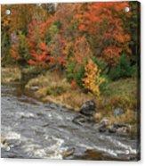 River Foliage Acrylic Print