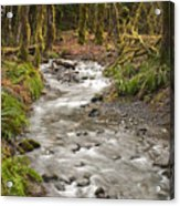 River Forest Acrylic Print