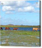 River Horses Horizon Acrylic Print