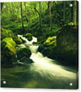 River In A Green Forest Acrylic Print