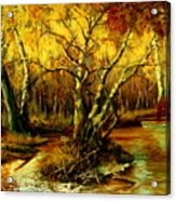 River In The Forest Acrylic Print