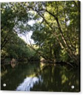 River In The Jungle. Acrylic Print