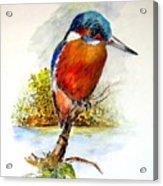 River Kingfisher Acrylic Print