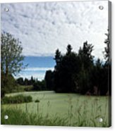 River Of Algae And Stippled Clouds Acrylic Print