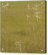 River Of Grass 1a Acrylic Print