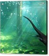 River Otter Swim Acrylic Print
