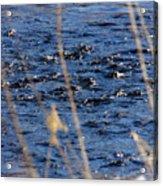 River Ripples Acrylic Print